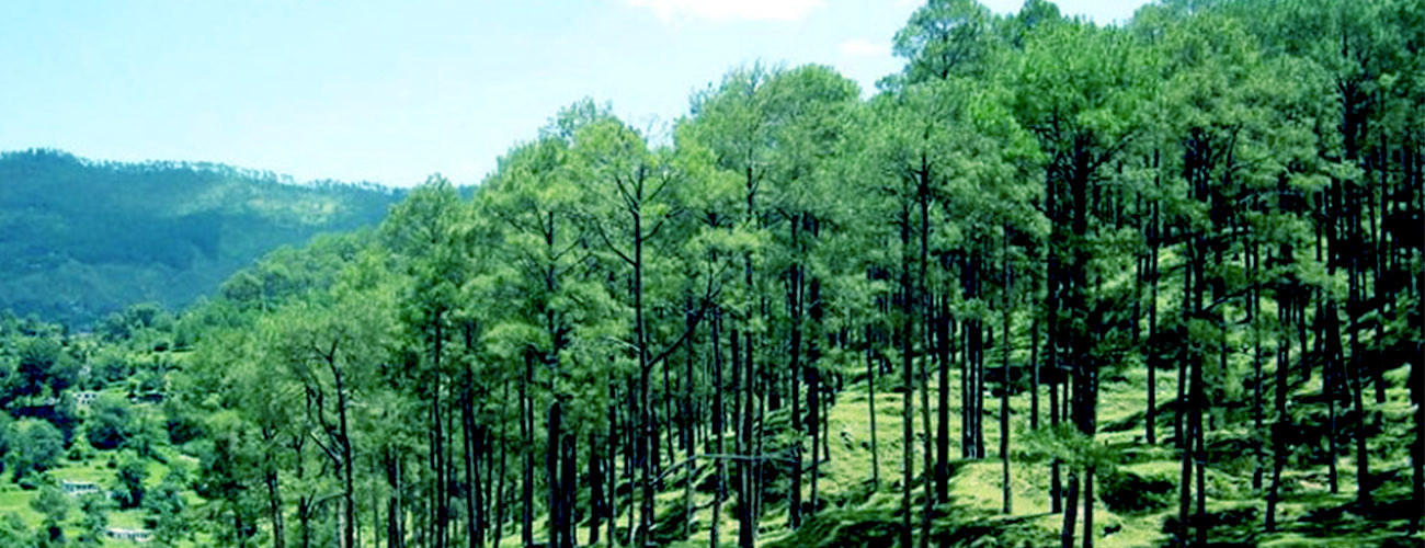Corbett,Nainital Tour Package