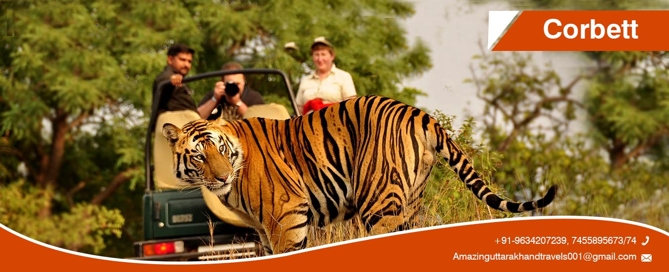 best corbett tour packages